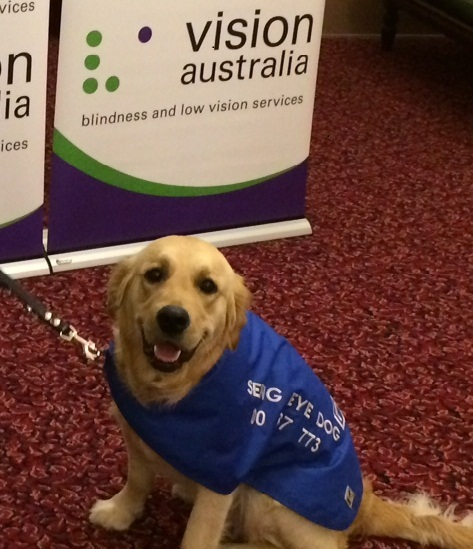 Seeing eye dog Becky at Victorian Parliament House